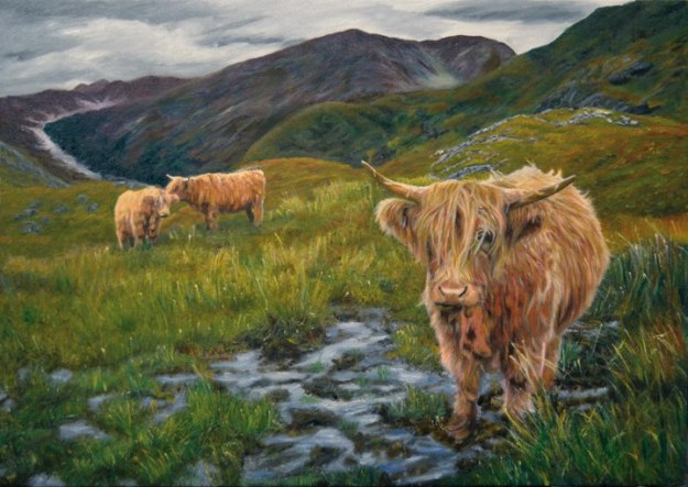 Highland_cows