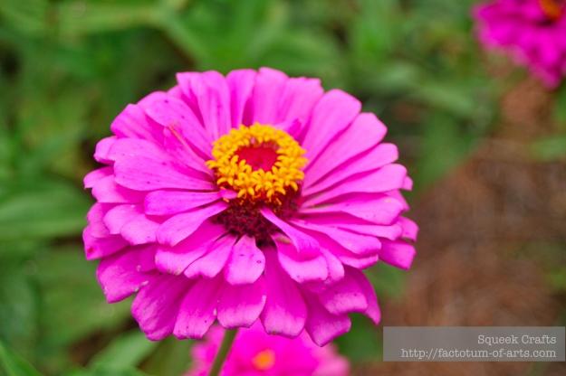 BooneHallPlantation_Flower1