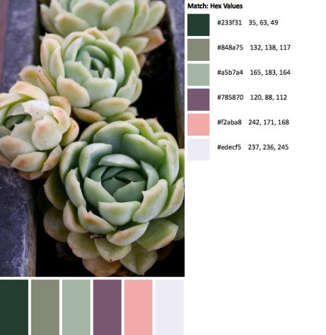 IMG_4933-palette